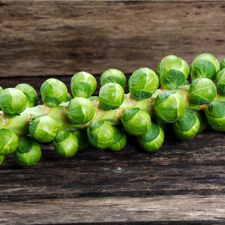 Turkish Natural Brussel Cabbage
