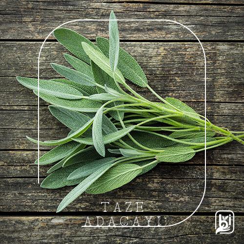 Turkish Natural Fresh Sage