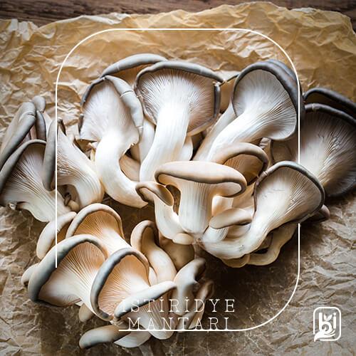 Turkish Natural Oyster Mushroom