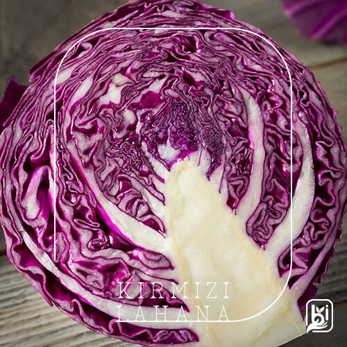 Turkish Natural Purple Cabbage
