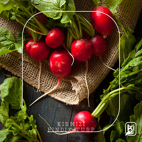 Turkish Natural Red Mini Radish