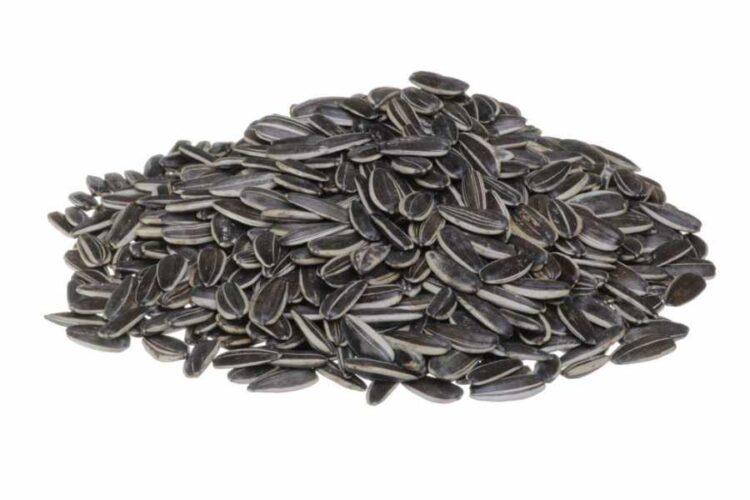 Turkish Sunflower Seeds (Saltless)